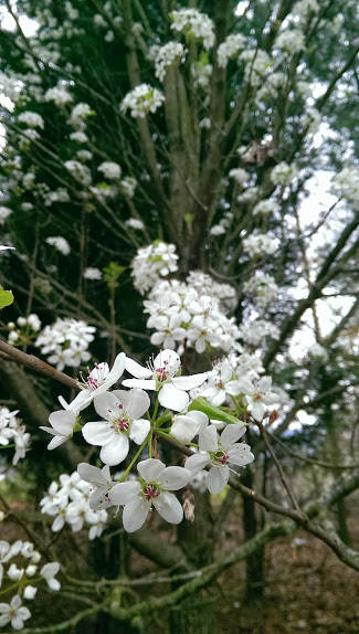 bradford flower