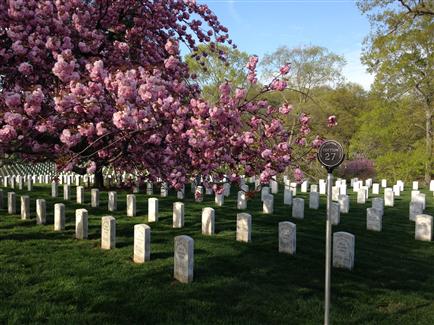 Arlington National Cemetery.  Photograph courtesy of Melissa Bohan and the Arlington National Cemetery.
