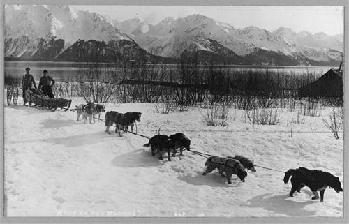 'Mush on, you huskies!' c. 1900-1930.  Image courtesy of the Library of Congress.
