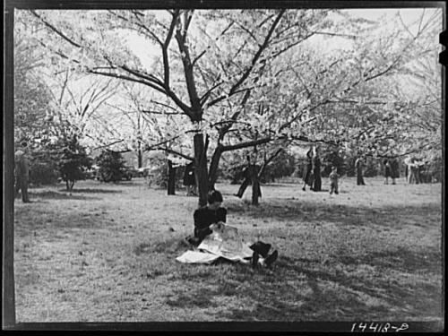 Woman reading a newspaper in the grove, 1941